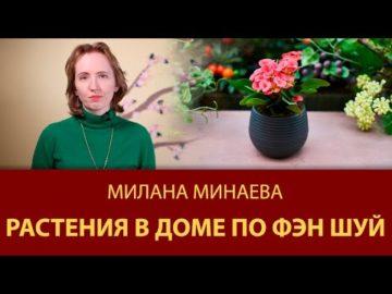 Правило Фэн Шуй 12: Растения в доме по Фэн Шуй - Мастер Фэн Шуй Милана Минаева